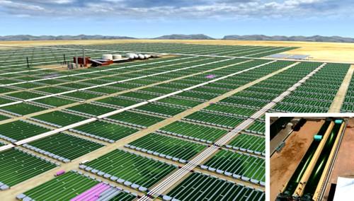 Biodiésel de algas