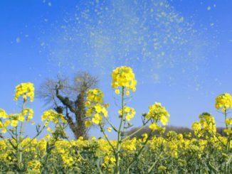 Alergias estacionales y cambio climático