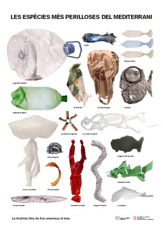 Las especies más peligrosas del mar Meditrraneo