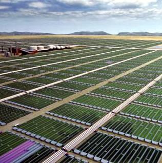 Combustible ecológico elaborado con algas