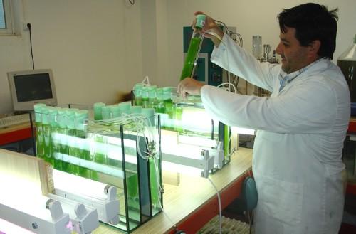 Instituto Biomar desarrolla biodiésel a partir de microalgas y cianobacterias que retienen CO2