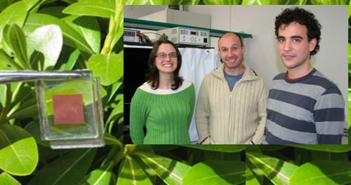 Investigan celdas solares que imitan la actividad de la fotosíntesis en las plantas