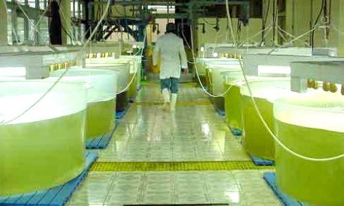Biodiésel de Algas, investigan en la UNC la producción de este biocombustible en escala industrial
