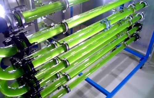El Biodiésel de Algas o Biodiésel Marino es el único biocombustible capaz de reemplazar al petróleo