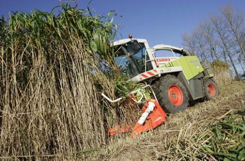 ¿Por qué un agricultor se debería dedicar a cultivar productos que se puedan transformar en biocombustibles?