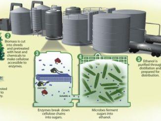 Producción de biocombustibles. ¿Cómo se producen el etanol y el biodiésel?