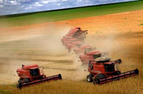 Seguridad alimentaria y biocombustibles. El precio de los alimentos y los biocombustibles