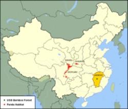 Bosque de bambú en la provincia china de Juangxi