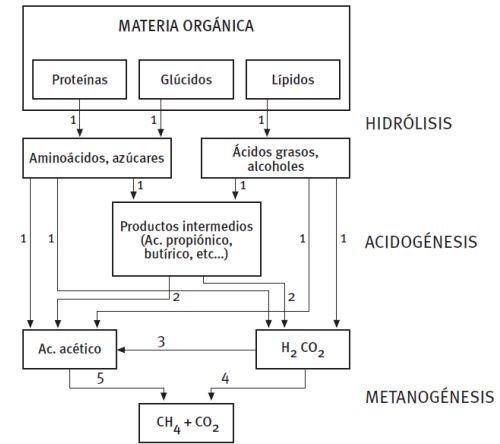 Fases del proceso de digestión anaerobia para la producción de biogás