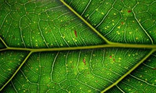 Imitan a las plantas para generar energía limpia