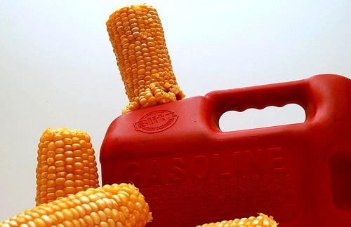 Proyecto Babethanol busca desarrollar una nueva generación de etanol lignocelulósico