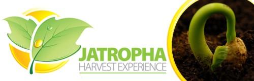 Jatropha Harvest Experience 2010