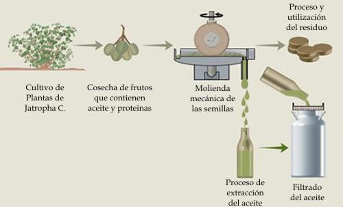 Biodiésel de aceite de Jatropha Curcas