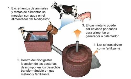 ¿Qué es el biogás? Proceso para generar biogás