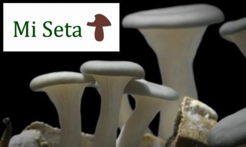 """Proyecto """"Mi Seta"""" para el cultivo de setas gourmet en posos de café"""
