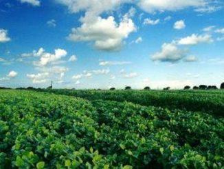 Agroecología, administrar sustentablemente los recursos agrícolas