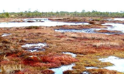 Las turberas y su importancia en la mitigación del cambio climático