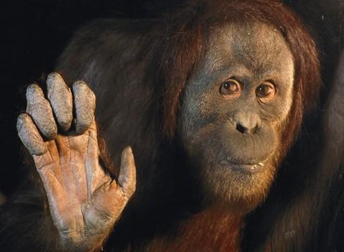 Especies extintas y en peligro de extinción