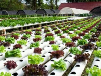 ¿Qué es un cultivo hidropónico? ¿Es posible hacerlo en casa?
