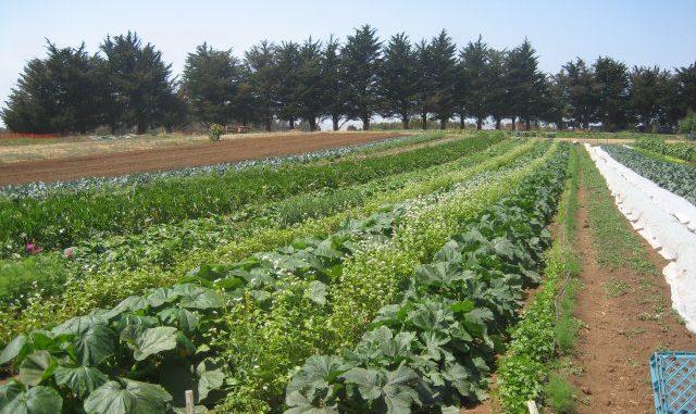 ¿Qué es la agroecología?