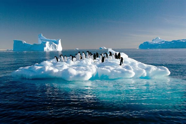 En Antártida hay graves reducciones de las poblaciones de pingüinos