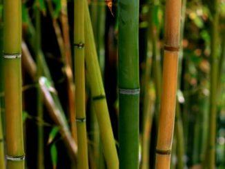 El bambú para la construcción
