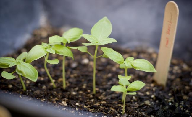 #6  Fertilizantes y abono
