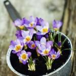 #8 Sartén con flores