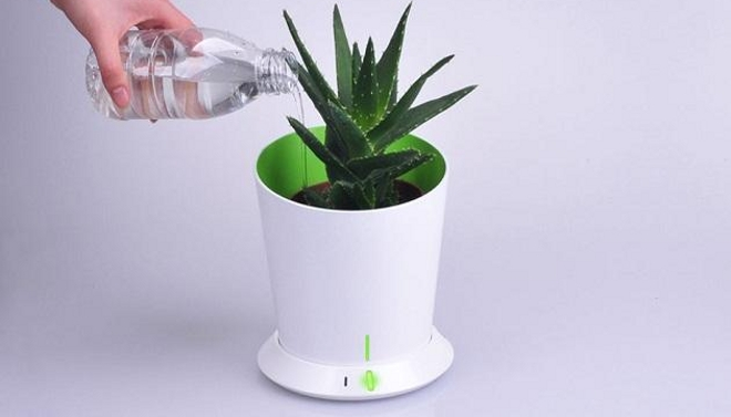 8 pasos imprescindibles para cultivar plantas saludables - Cultivar plantas aromaticas en casa ...