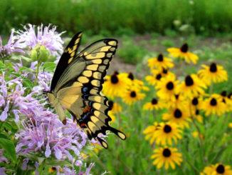Jardinería para cuidar el medioambiente