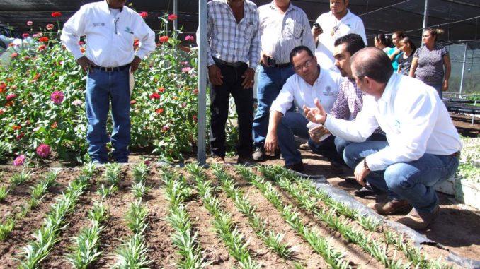 proyecto desarrollo sustentable desarrollo sostenible