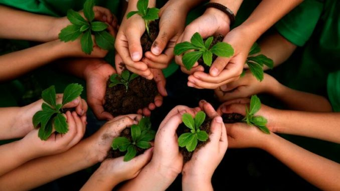 Cómo cooperar en el cuidado medioambiental