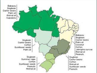 Biocombustible Brasil