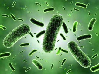 El nuevo rol de los microbios en la producción de biocombustibles