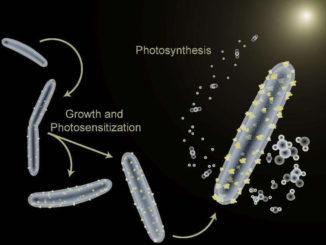 Moorella thermoacetica modificadas. Bacterias cyborg