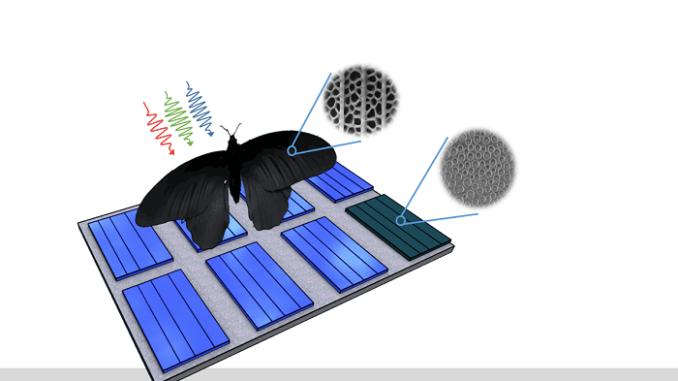 Imitan alas de mariposa para nuevos paneles solares
