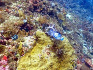 Corales enfermos por la contaminación plástica