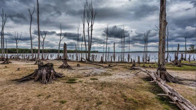 Los ecosistemas y el cambio climático