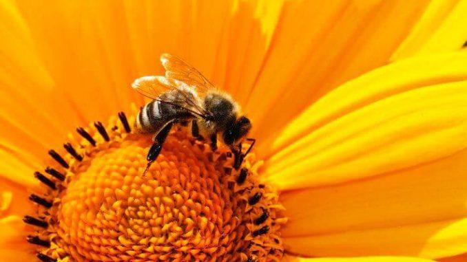 Los métodos de cultivo orgánico y los insectos polinizadores