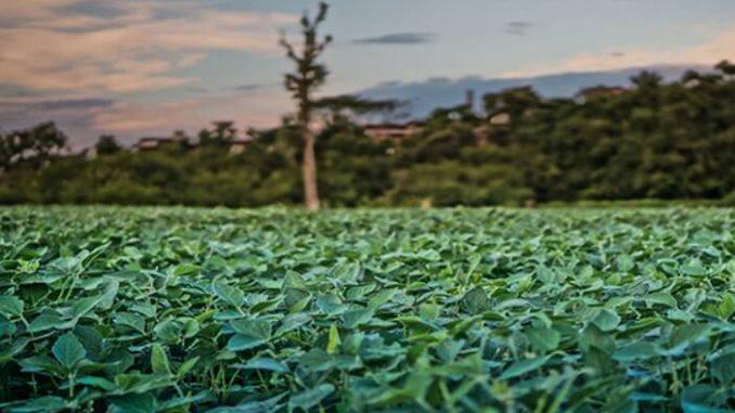 Menos biocombustibles, más espacios verdes: investigador exige cambios