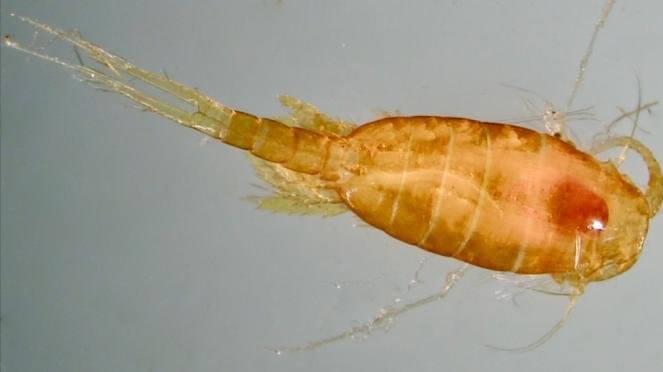 Niveles de oxígeno en los océanos
