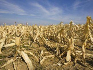 Crisis alimentarias debido al clima extremo y la geopolítca