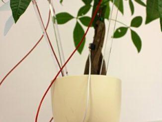 Plantas generan electricidad