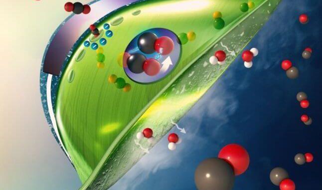 Hojas artificiales recogen dióxido de carbono del aire