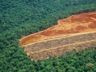 Desforestación - Especies en peligro de extinción