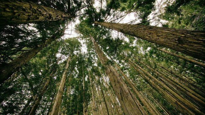 Los bosques y el cambio climático