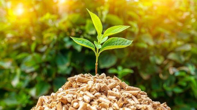 Rainforest Energy utilizará tecnología Infinity para producir biocombustible de biomasa
