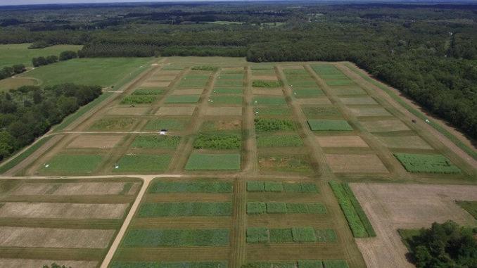 Biocombustibles de hierbas mitigan el calentamiento global