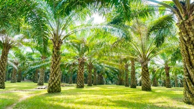 Precios del aceite de palma afectados por el coronavirus