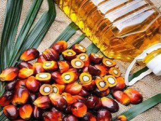 Tecnología para mejorar el rendimiento del aceite de palma en Malasia